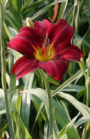 Day Lily 02