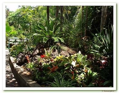 Orchid Garden 26 June 2008