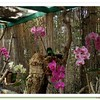Orchid Bower 1