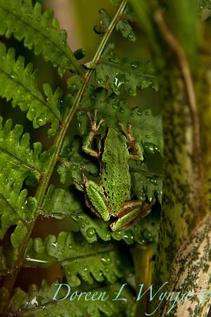 Frog_009