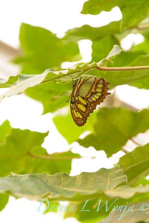 Butterfly_7284