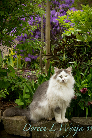 Howdy the Garden Kitty_001