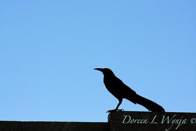 Black Bird_003