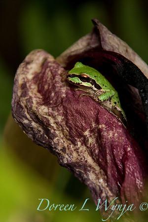 Frog_006
