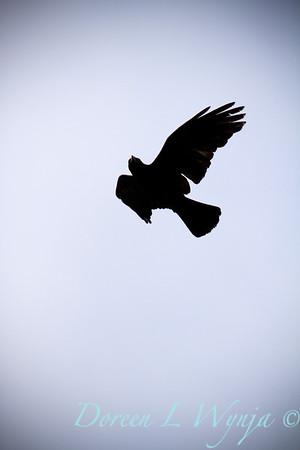 Black Bird_018