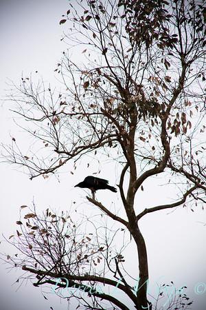 Black Bird_017