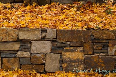 Stone retaining wall - fall leaves_639