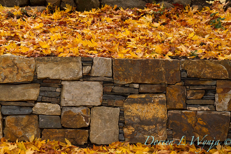 Stone retaining wall - fall leaves_639
