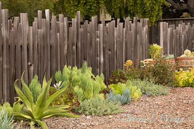 fence lined succulent garden_2504AMG