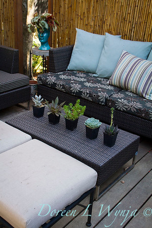 outdoor living - potted succulents_0669
