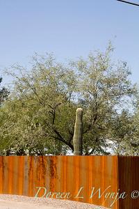 Corrugated rusty metal fencing_5764