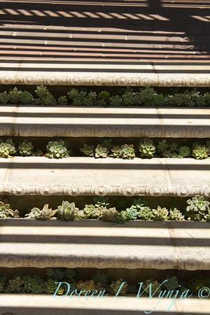 Sedum - Sempervivum stairway planting_319