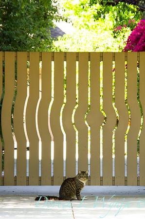 Wooden Gate_010