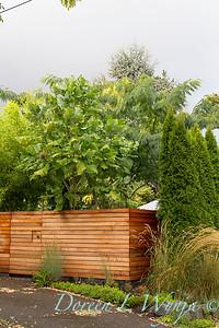 Magnolia macrophylla wooden fence_0343