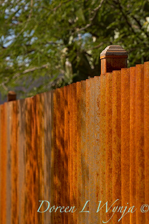 Corrugated rusty metal fencing_5783