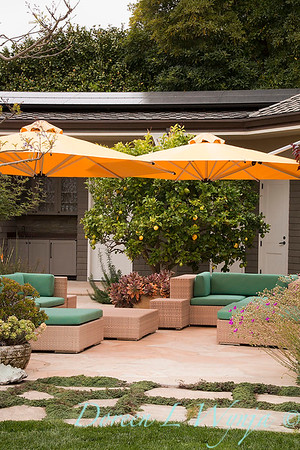 Citrus × limon - Mediterranean landscape - outdoor living_0858