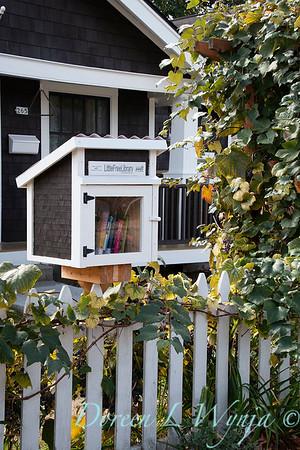 Neighborhood book box - Vitis vinifera arbor_6389