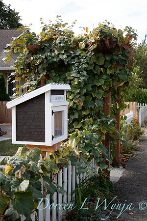 Vitis vinifera arbor - neighborhood book box_6385