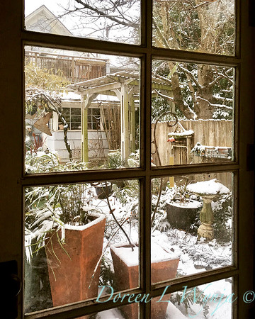 View from potting shed out to snow covered garden_2387_72dpi