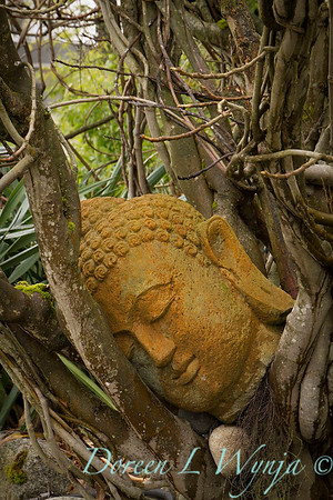 Head of Buddha_027