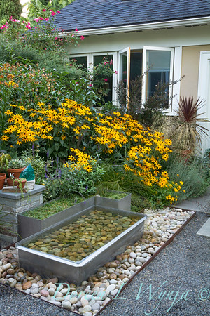 Rudbeckia Goldsturm Metal water feature_2093AMG