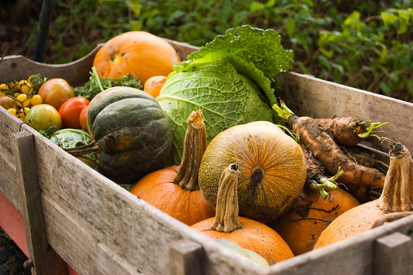 vegetables in wagon