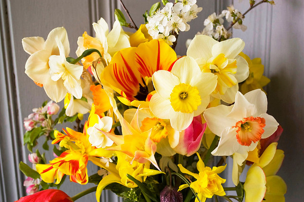 bouquet, spring (daffodils, tulips, fruit blossoms, fritillarias)