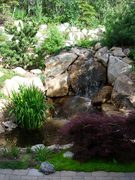 A lower-growing red Japanese maple draws the eye to the waterfall and yet hides the waterfall mechanics.