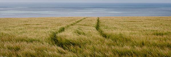 Barley Next the Sea