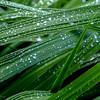 Dew on the Iris