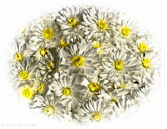"""' White & Yellow '  Santa Fe, NM  12""""x16"""" on 13""""x19""""  Premium Fine Art Paper  Open Edition     ~ Also available as a Note Card ~"""