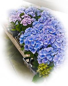"' Flower Bench '  Buckhead, GA  12""x16"" on 13""x19""  Fine Arts Paper  Open Edition"