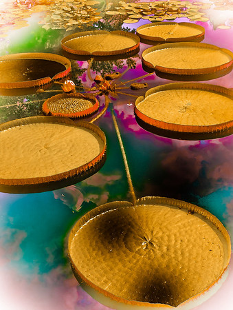 "' Lilly Pad Kaleidoscope ' Little Rock, Arkansas  12""x16"", on Fine Art Paper, Canvas,  or Luster Photo paper (12 mil)"