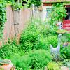 110604-Garden-001