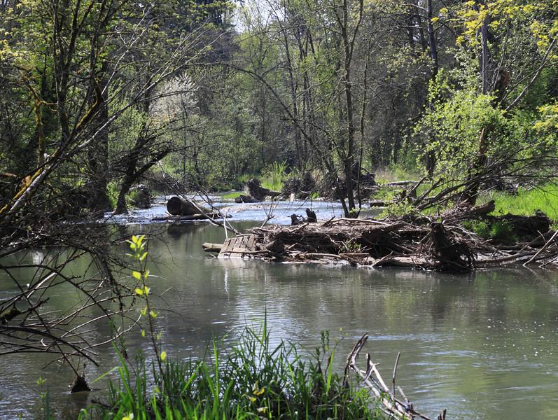 Johnson Creek 5/1/11