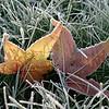Last tango in the hoar frost