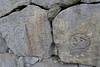 後楽園の塀の石。石の多くは伊豆から来たとのこと。文字は積み上げたか、石を切り出した組の名前か。