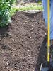 planting potatoes
