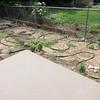 June 22, 2012 - Herb garden - in need of much weeding also.