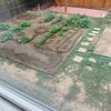 June 30 - View of the largest garden bed from my studio. It's finally weeded - now time to work on the walkways.