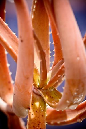 Aloe decaryi