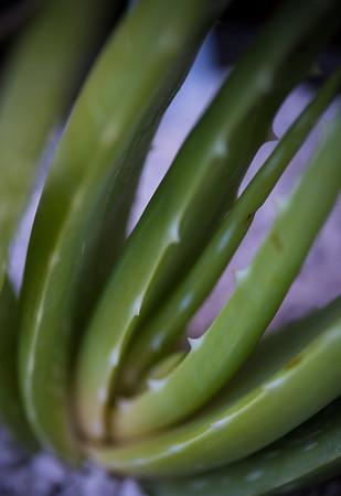 Aloe massawana