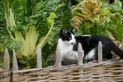 gatto nell'orto