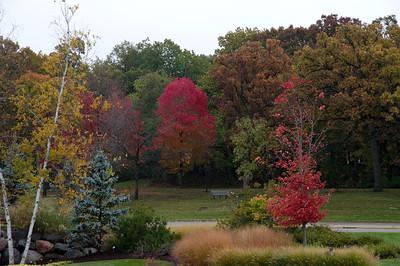 Rainyday Autumn park