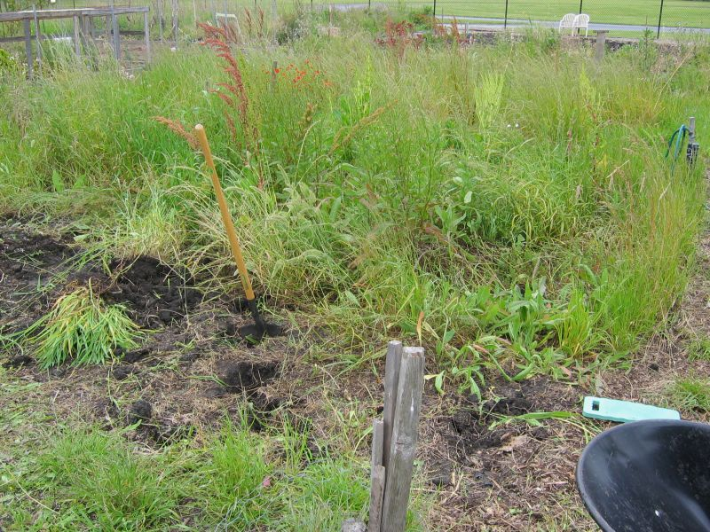 Here's our plot on the first day.  Some of the weeds were waist-high!