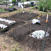 We made four mounds again, similar to last year, but we're planting different plants rather than the 4 sisters