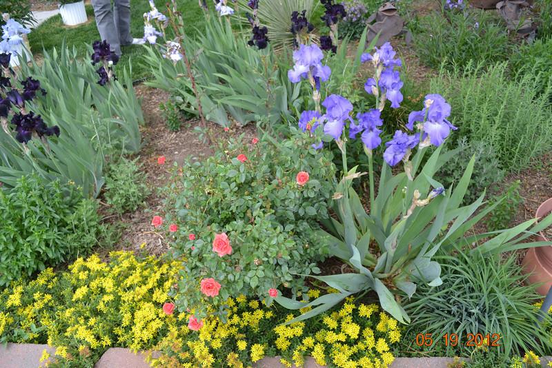 Iris, miniature rose, groundcover