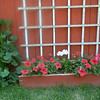 Red Petunias and miniature hollyhock (under back window)