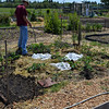Community garden is planted! The winter squash are covered to protect them from cucumber beetles