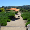 Not our garden. This is at Matanzas Creek Winery
